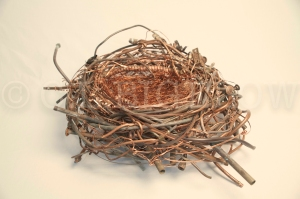 Nest by cl bigelow