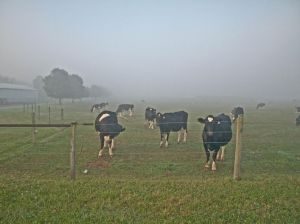 Pasture - Early Morning