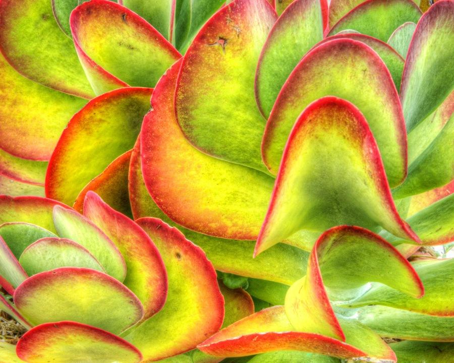 Cactus 6067 - Richard Weiblinger