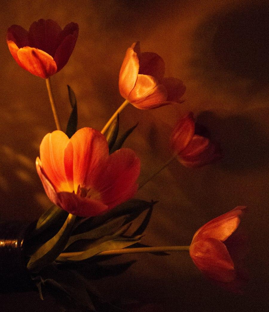Fleurs du mal (1 of 1).jpg