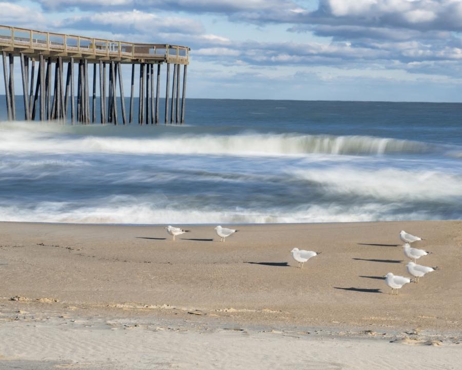 Pier with birds_3954 - Richard Weiblinger.jpg