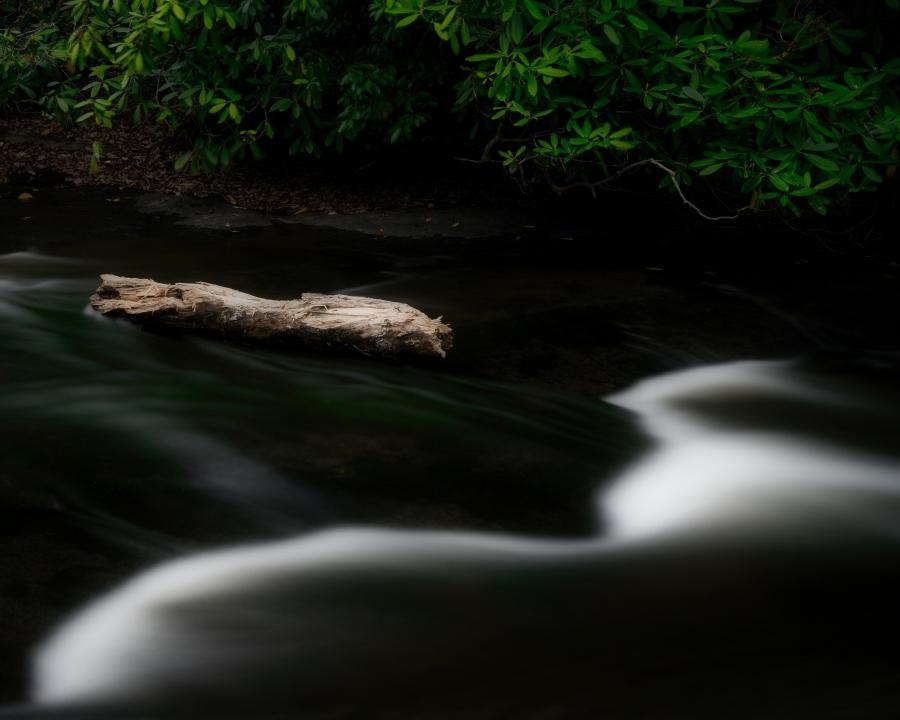 Log-at-Falls-9157 - Richard Weiblinger