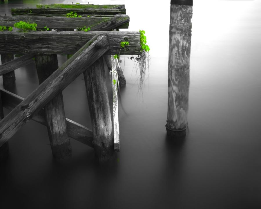 Pilings-Green-Focus-4003 - Richard Weiblinger